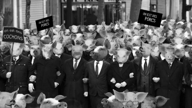 on_est_des_cochons